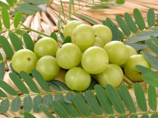 Amazing Benefits of Amla for Hair, Skin, and Health